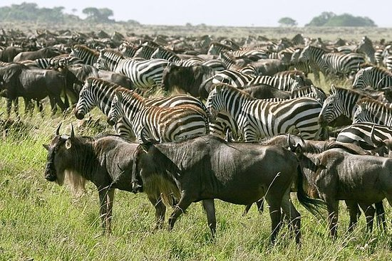4 Days Join Group Tarangire Serengeti...