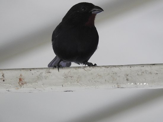 one of the birds