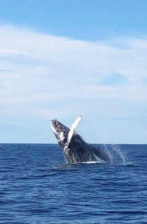 Zodiac Whale Watching Adventure Tour in Cabo San Lucas: Whale Breaching