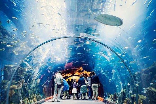океанариум дубай фото