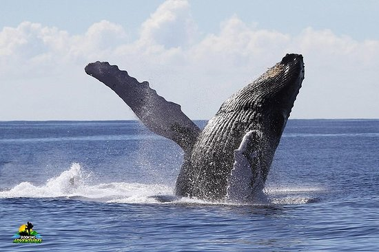 Bacardi Island + Walbeobachtung von...