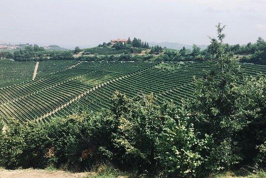 Barolo Wine Tour privado com enólogo de...
