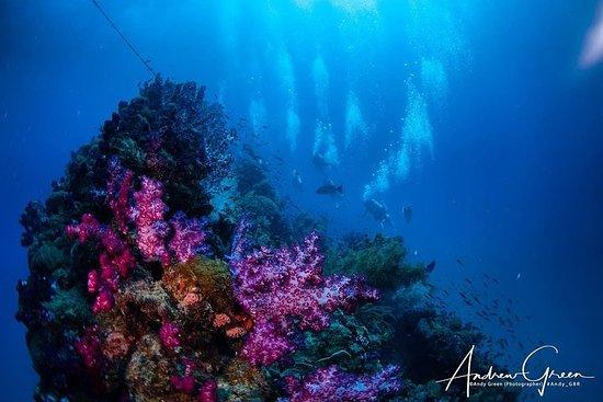 Bucea en el naufragio de S.S. Yongala en la Gran Barrera de Coral.