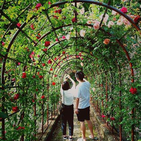 Tsuruoka, Japan: 蔓バラも多くアーチやバラのトンネルもあります