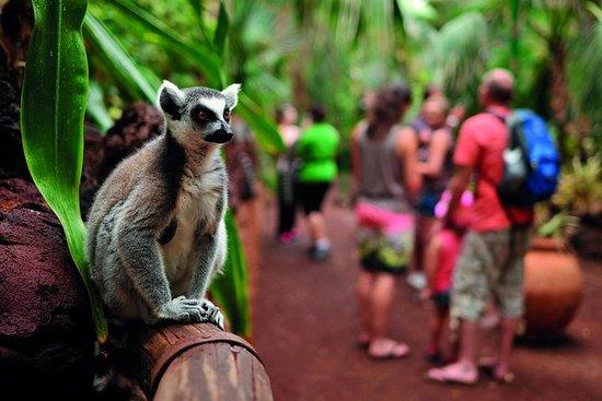 Billet d'entrée à Oasis Widlife et Lemur Experience