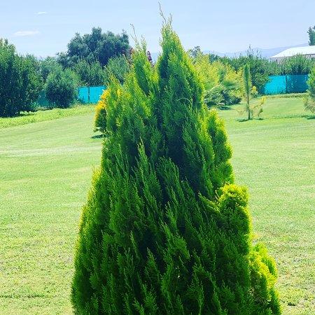 Albardon, Argentína: Jardin