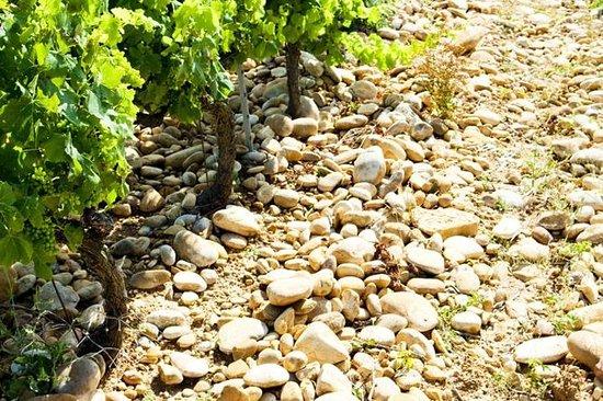 Tour del vino del valle del Ródano con picnic: Chateauneuf-du-Pape...