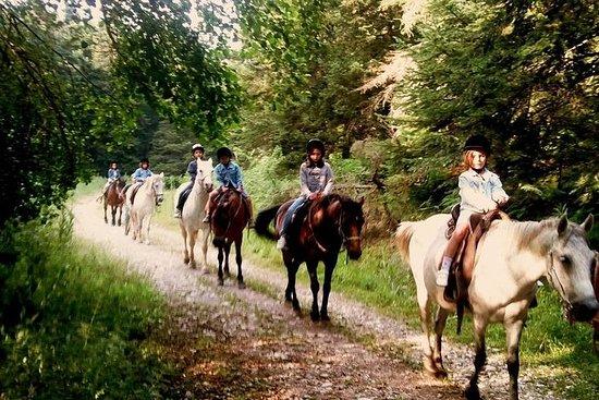骑马,洞穴参观和葡萄酒测试