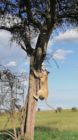 Národný park Serengeti, Tanzánia: Ma dove va ?