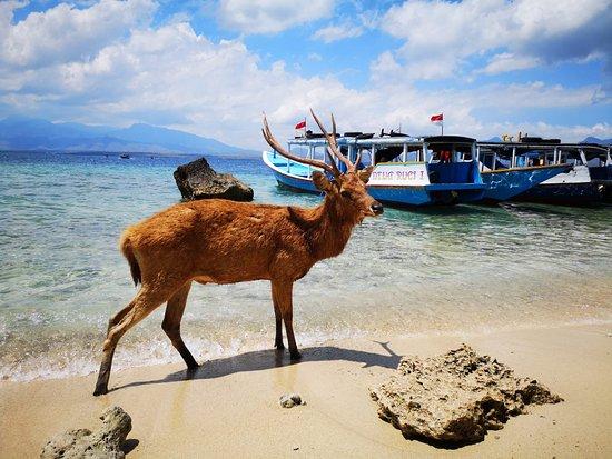5 Fun Dives in Pemuteran (for certified divers) - Exploration in Menjangan Park صورة فوتوغرافية