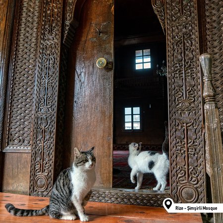 Happy Caturday furiends! Ours is filled with wandering in historical places. Like you all, every door is open to us. What's everyone else up to?  #Turkey #Rize #SimsirliMosque #Caturday