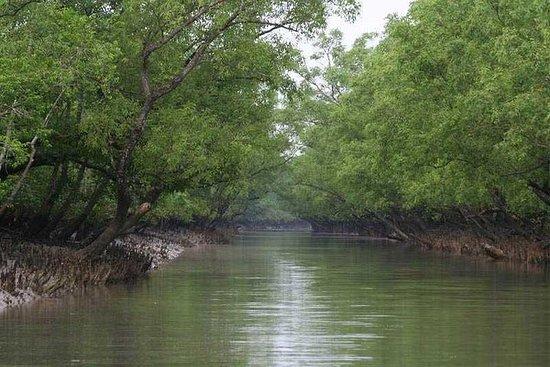Sunderban Mangrove Wetland - Tiger Reserve (3 Days)