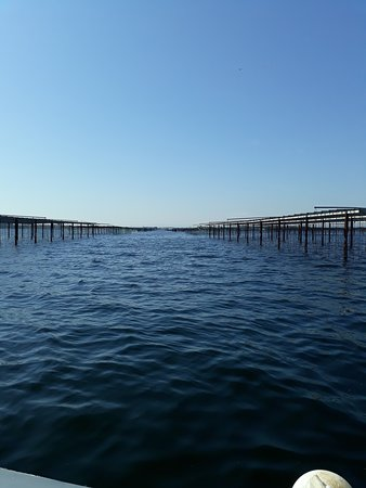 Les parcs à huîtres