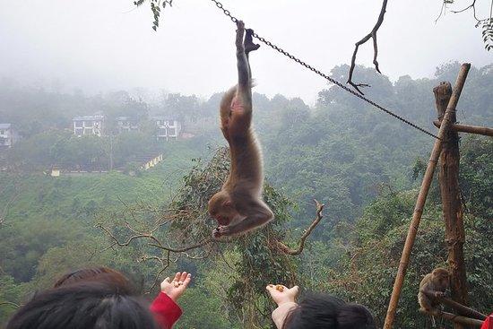 Randonnée sur la colline des singes
