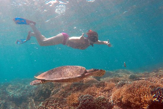 Gili Island Snorkeling Private Day...
