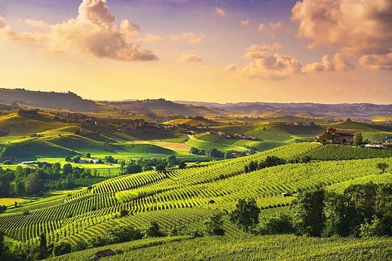 From Turin, Langhe wine tour with Transfer and Lunch