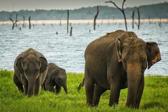 Safari au parc national de Wilpattu...