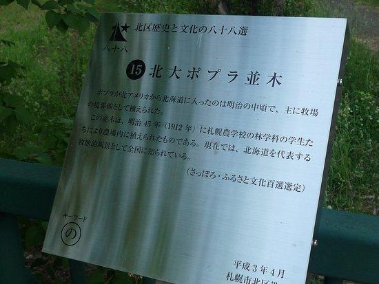 Poplar Trees, Hokkaido University 03