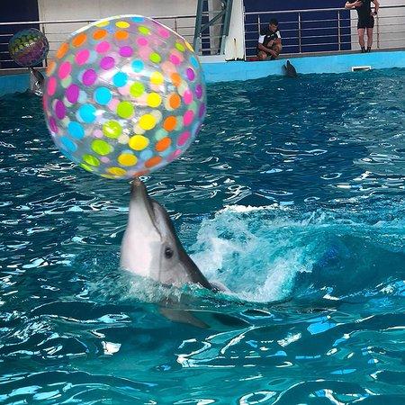 Dolphinarium Lazarevskiy