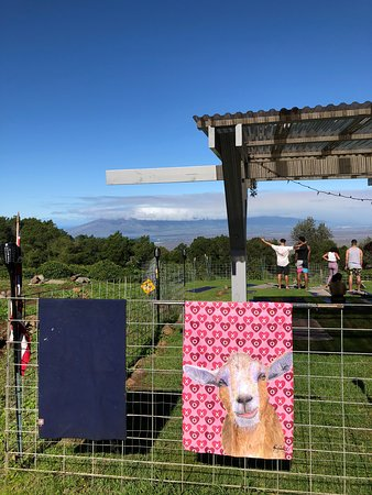 The yoga pen with a pink goat banner displayed.