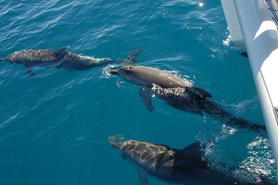 Fraser Island Sailing Adventure Crucero y avistamiento de delfines...