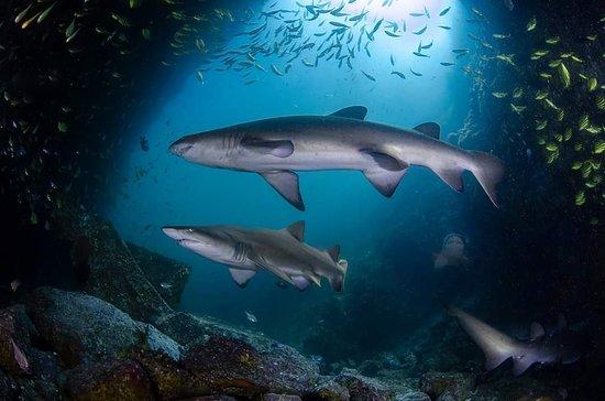 South West Rocks, Australie : Fish Rock Cave