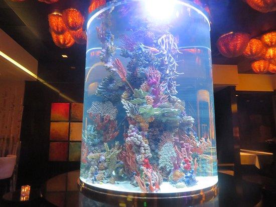Atlantis Reno Christmas 2020 Aquarium, Atlantis Steakhouse, Reno, Nevada   Picture of Atlantis