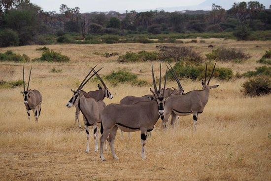 Mtana Safaris