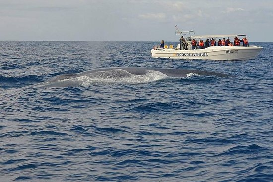 半日鯨とイルカウォッチングツアー