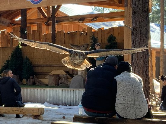 Don't miss the bird show...just duck when you see them coming!