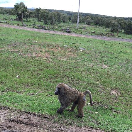 Kiambu, Кения: Wonderful