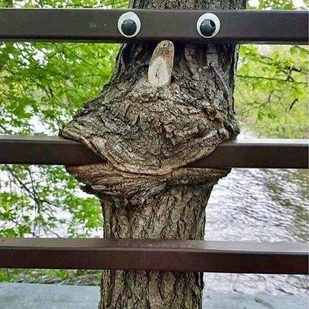 Campobello, SC: Fence art