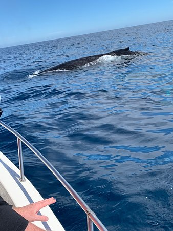 Humpback Whale Watching in Cabo San Lucas: Humpback whale near the boat