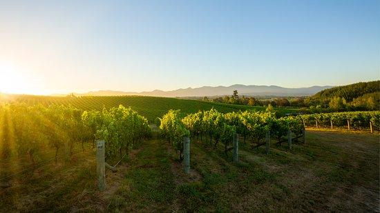 Flaxmore Vineyards