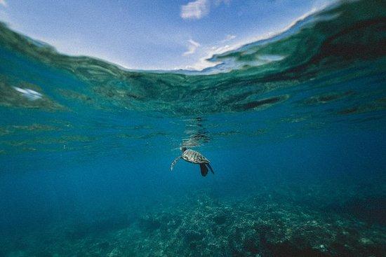 Gita di mezza giornata a Turtles e Keri Caves