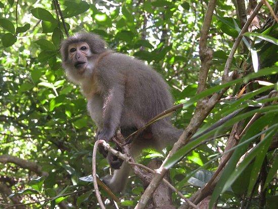 Национальный парк Горы Удзунгва, Танзания: Sanje Crested Mangabey Monkey