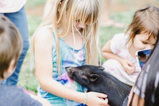 Animal Interaction Tour – fotografia