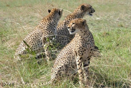 Boris P Safaris and Tours