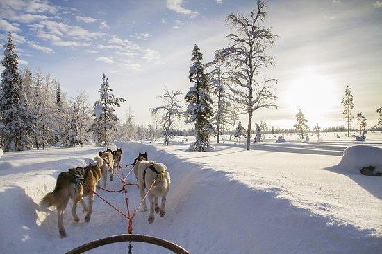 赫斯基狗窩參觀和赫斯基2公里雪橇