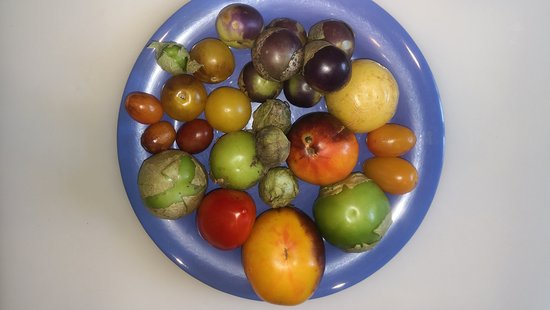 Few types of tomatillos and tomatoes