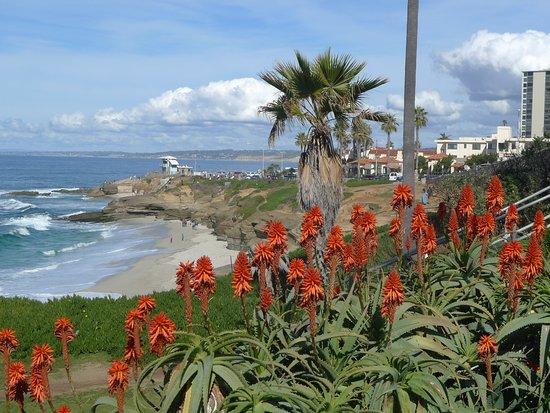 coastline (447502166)