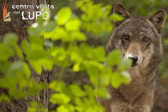 狼遊客中心-導覽遊