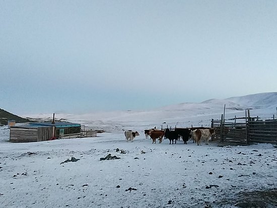 Kosh Agach, Russia: Чабанская стоянка на границе с Монголией и Китаем. Горный Алтай.