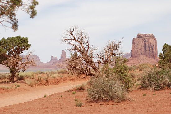 Monument Valley, UT: Souvenirs Voyage Californie --- La végétation résiste à la chaleur intense