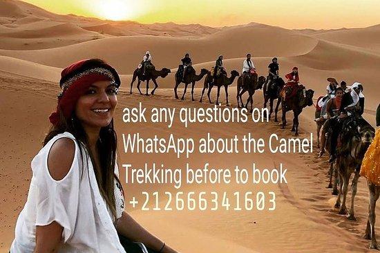 Camelo no Saara e Camping