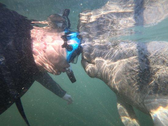 Small Group Swim with Manatee Adventure: Manatee lovin'