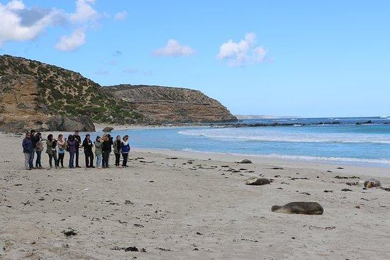 阿德萊德為期2天的袋鼠島探險之旅