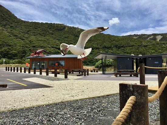 Clarence, New Zealand: What a cool snapshot of our feathered friend on his little visit this morning!