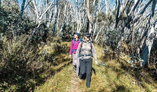 Cobungra, Austrália: Hiking at Alpine National Park