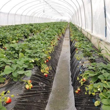 Deai no Mori Strawberry Farm
